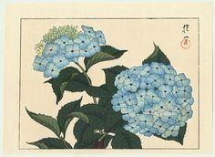 Sakai Hoitsu (1761 - 1828) Japanese Woodblock Reprint  Hydrangea