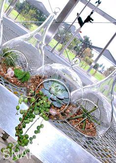 DIY West Elm Air Plants