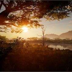 #Africa #nature #gamedev #gameart #UE4 #unrealengine 3d Assets, Unreal Engine, Game Dev, Unity, This Is Us, Environment, Africa, Animation, Sunset
