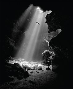Learn how to take photos underwater. Go on an exciting underwater photo adventure. See beautiful underwater photos and prints. Underwater Tattoo, Underwater Photos, Underwater Photography, Ocean Underwater, Black And White Picture Wall, Black And White Pictures, Black White, Dark Photography, Black And White Photography