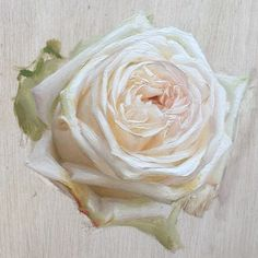 The January-February issue of Artists on Art magazine is out! In it, you can find everything you never knew you wanted to know about how I paint roses! I wrote an article outlining my step by step process for painting flowers, using the rose pictured here as an example. For those that care to read, I hope you find it informative and enjoyable. Subscribe to the magazine now at www.artists-on-art.com #artistsonart #ohararose #stepbysteppainting #paintingarose P.S. if you do read the article…