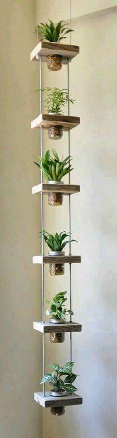 Ideas con plantas del  jardín.