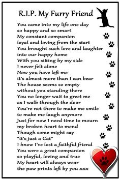 CAT Bereavement Gift Magnet - RIP My Furry Friend - cat loss, sympathy, memorial Flexible Magnet x Pet Loss Grief, Loss Of Dog, Memorial Poems, Cat Memorial, Pet Memorial Gifts, Pet Poems, Cat Loss Poems, Pet Loss Quotes, Dog Death Quotes