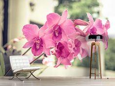 Foto #Tapete Ein Fensterplatz für die Orchideen