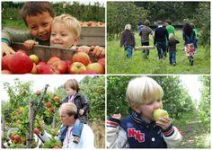 Zelf appels en peren plukken! -Landgoed De Olmenhorst