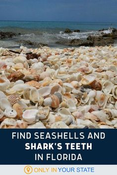 Find seashells and shark's teeth on this beautiful Florida beach! It's a great place for a family-friendly beachcombing adventure. | Summer Travel Vacation Packing, Florida Vacation, Florida Travel, Florida Beaches, Vacation Destinations, Vacation Spots, Travel Usa, Vacations, Vacation Ideas