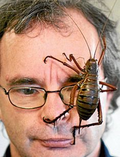 Some of the Worlds Biggest Bugs   Giant Weta: New Zealand. (Thankfully not on the mainland.) Oh..and this insane guy.