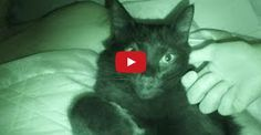 Do You Let Your Cats Sleep on the Bed?