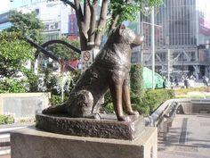 hashiko | Hachiko Statue in honor of Hachiko (Japan)
