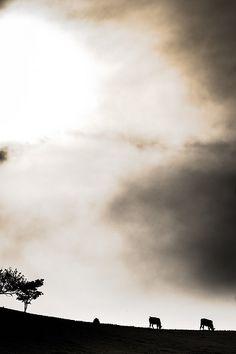 Céu inventado...Cena rural/ Invented sky... rural scene