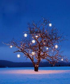 Movarian Star Lights, beautiful night image