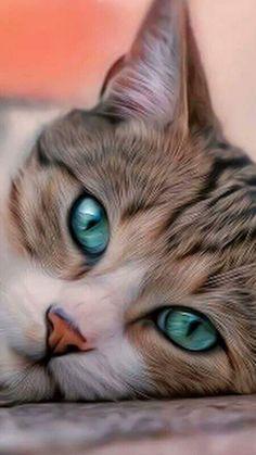 Meu sonho ter esses olhos #lindoooo #ilovecats
