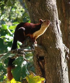 Giant Indian Squirrel - by sharad | GardenTenders.com :: gardening community