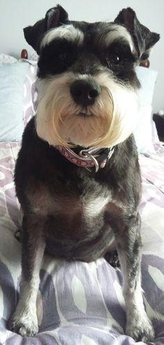Precious Lilly... As sweet as she was pretty...