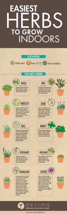 Easiest Herbs to Grow Indoors