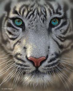 white tiger - Buscar con Google
