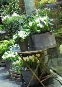 white tulips and zinc~perfect combination! White Tulips, White Flowers, Beautiful Flowers, Fresh Flowers, Spring Flowers, Flower Market, Flower Shops, Flower Studio, White Gardens