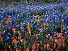 Paysages de fleur - Fonds d'écran et Wallpapers gratuits: http://wallpapic.fr/paysages/paysages-de-fleur/wallpaper-41092