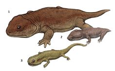 1. Seymouria baylorensis 2. Pantylus cordatus 3. Discosauriscus austriacus