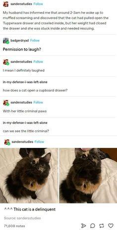 Funny Animal Memes, Cute Funny Animals, Cat Memes, Cute Baby Animals, Funny Cute, Animals And Pets, Cute Cats, Hilarious, Crazy Cats