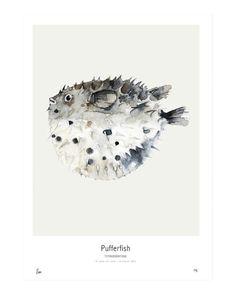 My Deer Art Shop- Pufferfish Poster – Bloesem Class Fine Art Photo, Photo Art, Painting & Drawing, Watercolor Paintings, Watercolours, Watercolor Ideas, Kate Pugsley, Balloon Fish, Pisces