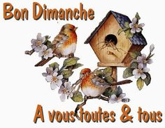 Miséricorde Divine, Image Citation, Bon Weekend, Beautiful Birds, Messages, Animals, Point, Diy Crafts, Blog