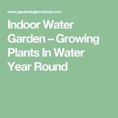 Indoor Water Garden – Growing Plants In Water Year Round