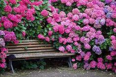Весной невозможно пройти мимо цветущего растения, которое так и манит своим пьянящим ароматом. Как здорово, когда такой кустик растет прямо в вашем саду! Декоративные кустарники украсят участок, обла…
