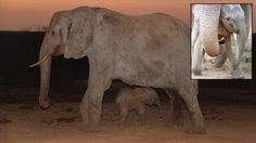 An Elephant Never Forgets: Mother Brings Newborn to Animal Sanctuary That Raised Her