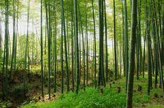 Kyoto by Sakashi Yui on 500px