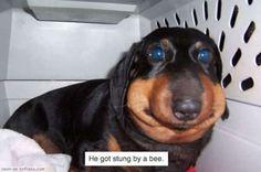 12 personnes victimes de piqûres d'abeilles transformées en véritables smileys vivants