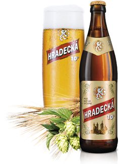 10° Beer of Hradec - Pale Draught Beer, 4,4 % vol.  Pale draught beer of full taste with a dense head. Czech beer we brew according to traditional technology ferments in open fermenting tanks and matures in low temperatured lager cellars.