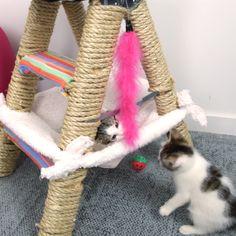 DIY Cat Ladder Fort #pets #cat #DIY