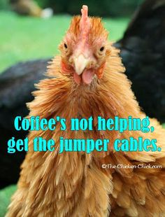 Coffee's not helping. Get the jumper cables. ~The Chicken Chick