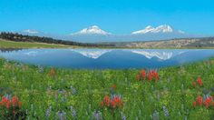 ponds and lakes - Google Search