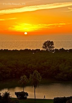 #florida #sunsets #oceanscapes #palmtrees #mangroves #silhouettes #SWFL