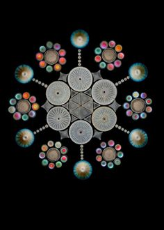 Antique microscope slide featuring diatoms, Matthias Burba, Naturwissenschaftlicher Verein, Hamburg, Germany