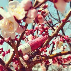 Όμορφο σαν τα άνθη των λουλουδιων