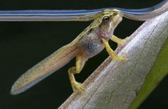 Wildlife in the Garden, winner: Tadpole by David Chapman