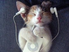 Kittie Cat + music = happy beast (^.^)