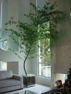 bambu mosso na decoracao - Pesquisa Google