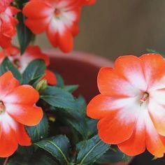 🌼🌼🌺 #happytuesday #postoftheday #picoftheday #photogram #photography #photooftheday #flower #orange #orangeflower #flowerspic #flowers #tuesdaymood #tuesdaypost #instaphoto #instadaily #instaflower #bloomsoftheday #blossom #green #leaf