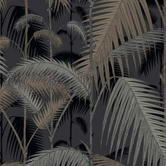 Palm Jungle 95/1004 by Cole & Son