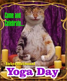 Celebrate International Yoga Day with this adorable ecard. Free online Cat Yoga ecards on International Yoga Day Unusual Holidays, Special Holidays, International Yoga Day, Holiday Fun, Ecards, June, Kitty, Celebrities, Videos