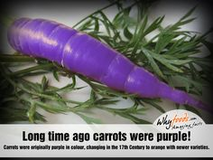 Carrots And Anti Aging Care: Top Three Reasons You Should Crunch Down On This Orange Powerhouse - BeYouthful - how to look and feel more youthful Amazing Food Facts, Fascinating Facts, Science Experience, Growing Carrots, Beta Carotene, Baby Carrots, Fruits And Veggies, Vegetables, Garden Inspiration