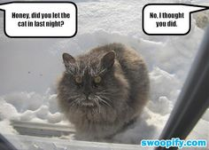 Someone Left The Cat Out Last Night #humor #lol #funny