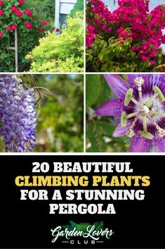 20 Beautiful Climbing Plants for a Stunning Pergola Tall Indoor Plants, Large Plants, Plant Images, Plant Pictures, Winter Plants, Outdoor Shade, Pergola Garden, Big Leaves, Office Plants