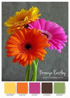 Colour Combinations for Daisy Delight – Part B – addinktive designs