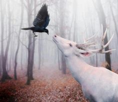 White stag and black raven