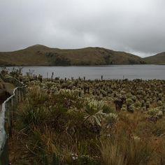 Meditar frente a El Voladero Carchi Cercana a la ciudad del Ángel, se encuentran las lagunas El Voladero, lugar ideal para meditar rodeado d...